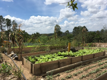Organic gardens.
