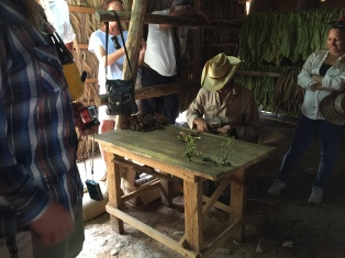 Cigar rolling demonstration.